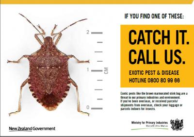 BMSB Catch Ad